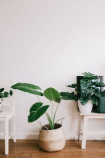 Plants Role in Minimalistic Design